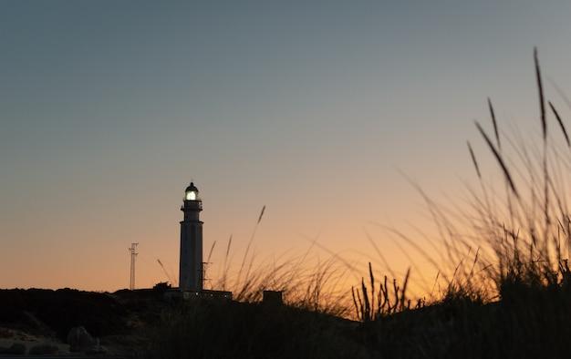 Tuft of beach grass in the sunshine and a lighthouse tower at sunset trafalgar, cadiz, spain.