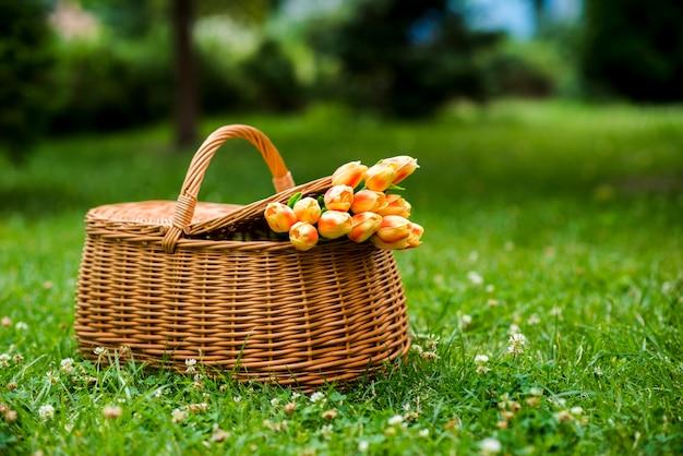 芝生の上のピクニックバスケットのチューリップの花束