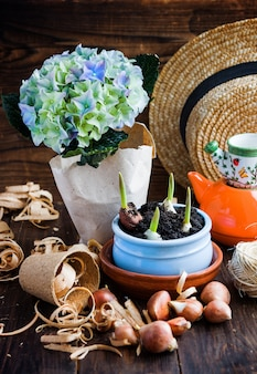 Tulip bulbs, potted sprouts, wicker hat, hyacinth and tools.