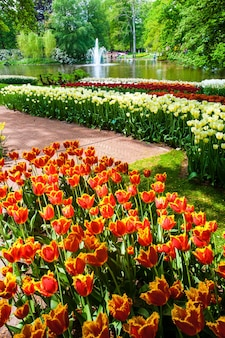 Campo di tulipani nei giardini keukenhof, lisse, paesi bassi