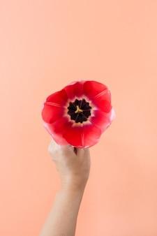 Букет тюльпанов в женских руках на живом коралле