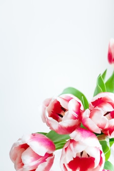 Tulip flower head with copy space, vertical. spring delicate holiday bouquet on white wall. template for postcard, banner