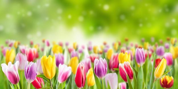 튤립 꽃 초원