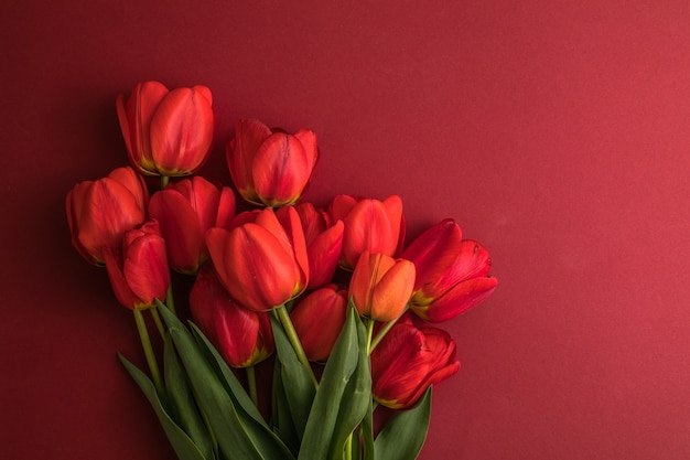 赤い背景の上のチューリップの花