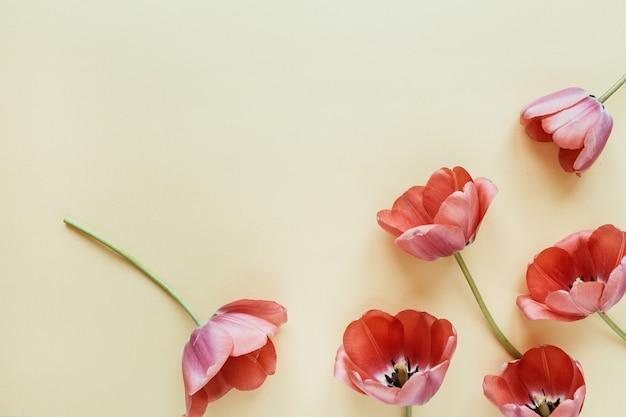 パステルにチューリップの花柄。