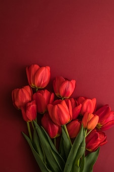 Tulip flowers on red background