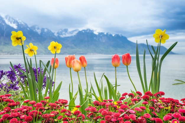 Tulip flowers with lake and snow mountain