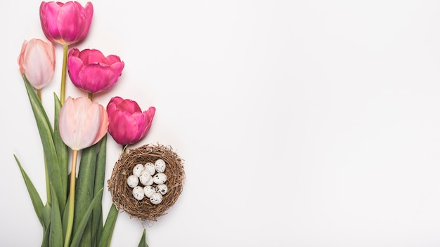 Tulip flowers with quail eggs in nest