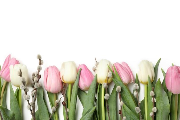 Тюльпаны и сережки ивы, изолированные на белом фоне