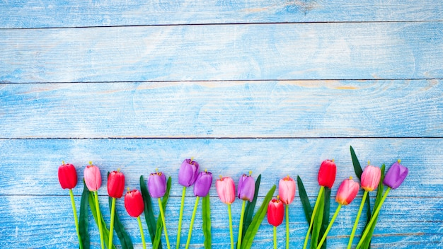Tulips on blue wood background
