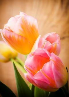 チューリップ、花のコンセプト。