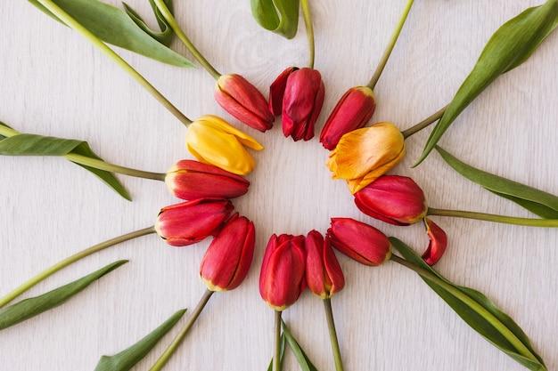 Рамка из тюльпанов