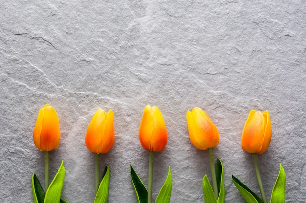 Tulips on gray stone copyspace