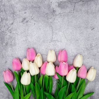 Tulips on a gray