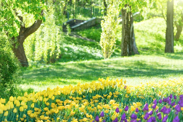 美しい緑の日当たりの良い公園のチューリップ