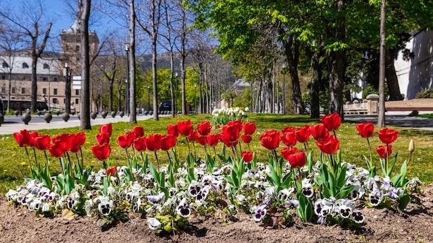 마드리드의 el escorial에있는 도시 공원의 정원에있는 튤립. 유네스코,