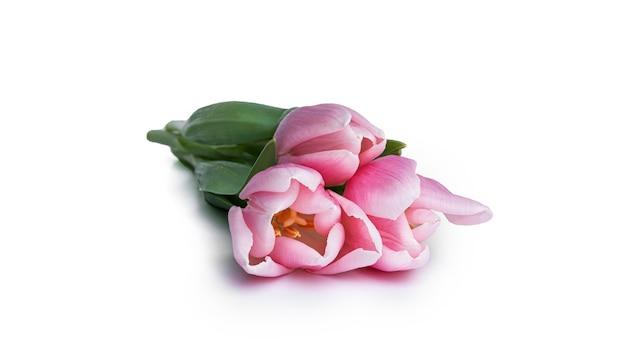 Тюльпаны, изолированные на белом фоне. фото высокого качества
