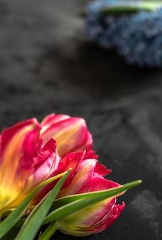 Тюльпаны лежат на темно-сером фоне
