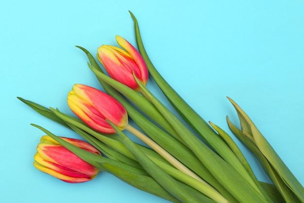 Tulips on a light blue background. spring fresh flowers