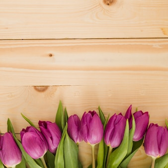 Tulips line on wooden background