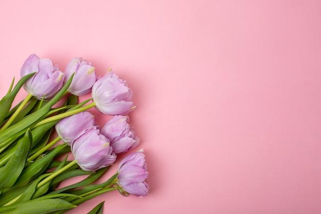 Тюльпаны на розовом фоне мест для текста