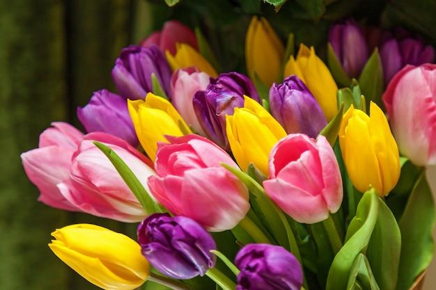 濃い緑色の背景に紫、黄色、ピンクのチューリップ。チューリップの花束