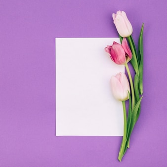 Tulips with blank white paper on purple backdrop
