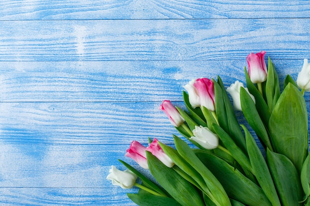 Tulips with macaroons on blue wooden surface