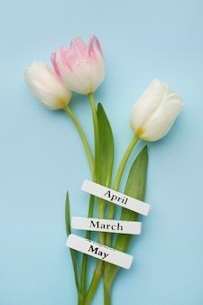 Tulips with spring months labels