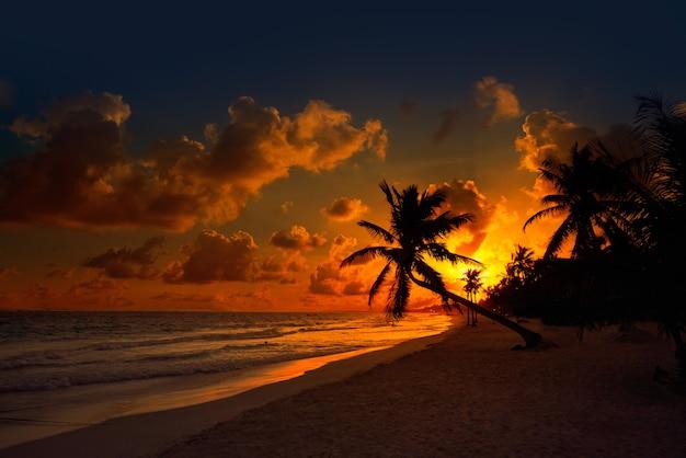 Tulum beach sunset palm tree riviera maya
