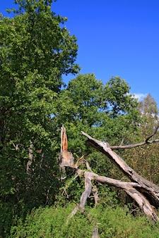 Упавшее дерево в зеленом лесу