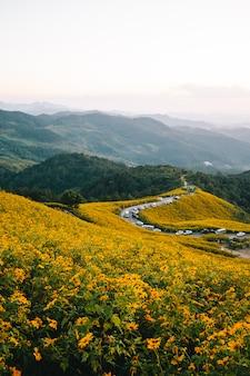 Tung bua tong mexican sunflower field in doi mae u kho, mae hong son province, thailand.