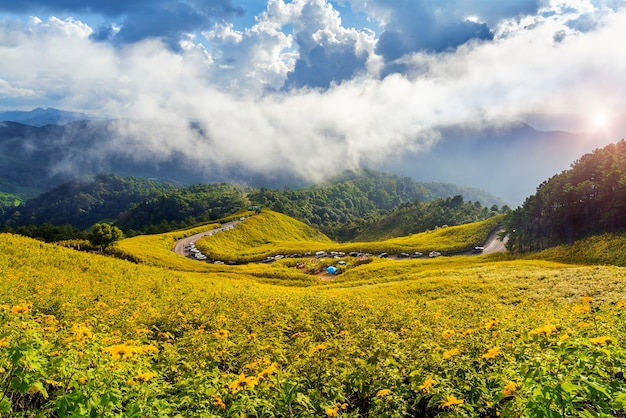 Tung bua tong or mexican sunflower field at mae hong son province in thailand