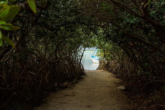 ジャングルの中の湖へのトンネル