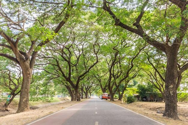 The tunnel of trees in  ayutthaya historical park, ayutthaya, thailand.