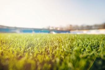 スタジアムの芝草
