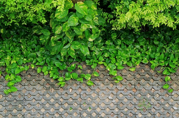 Turf stone sidewalk with vibrant green plants