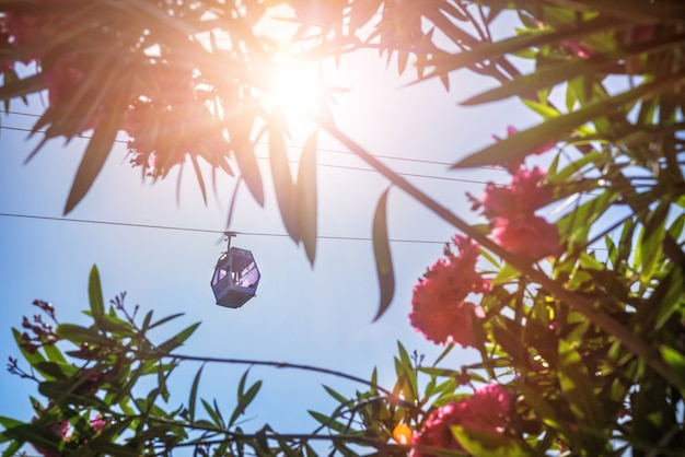 七面鳥。アラニヤの空に浮かぶロープウェイの小屋とキョウチクトウのピンクの花。