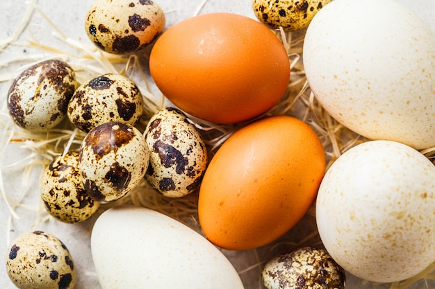 Turkey, quail and chicken eggs on hay on gray background, top view.