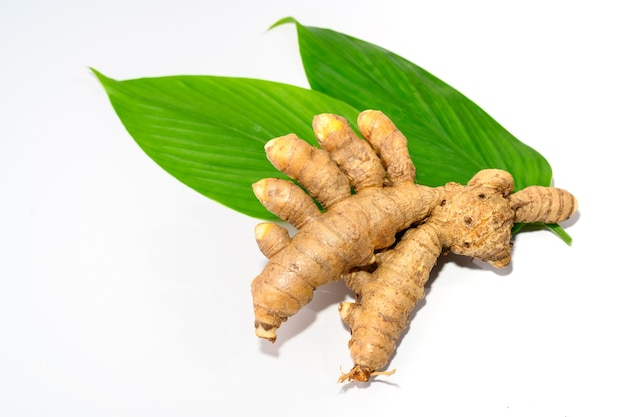 심황 뿌리와 심황 잎 태국 허브와 흰색 배경 클로즈업에 고립 된 인도 허브