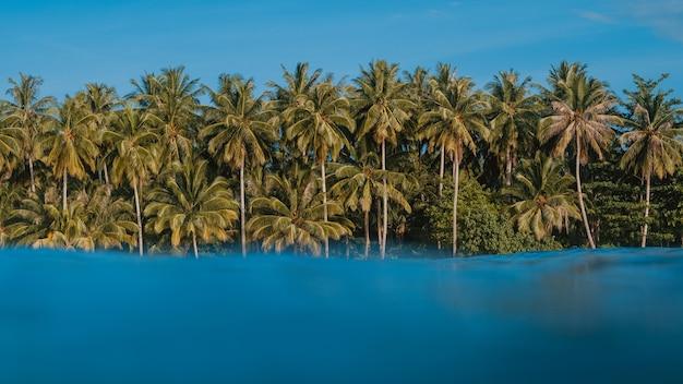 Бирюзовая прозрачная вода с тропическими деревьями на пляже на заднем плане в индонезии