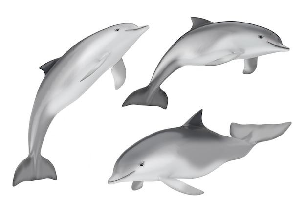 Tursiops truncatus ocean or sea bottlenose dolphin on a white background. 3d rendering