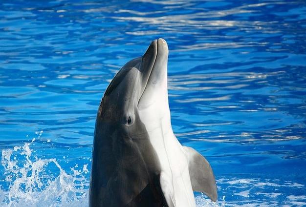 Tursiops афалина дельфин рыбой морских млекопитающих