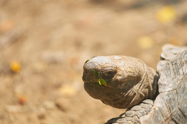 Turtle head and eye turn back and glance or look with blur background on sun light