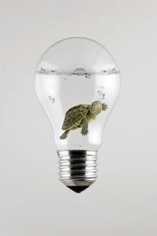 Черепаха внутри лампочки