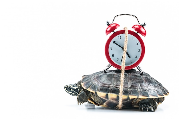 Turtle and red clock