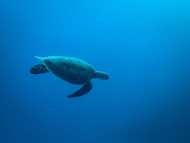 Turtle swimming under the sea