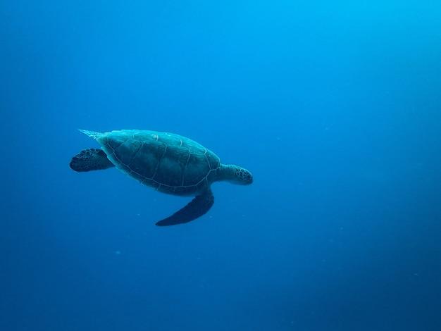 海の下を泳ぐカメ