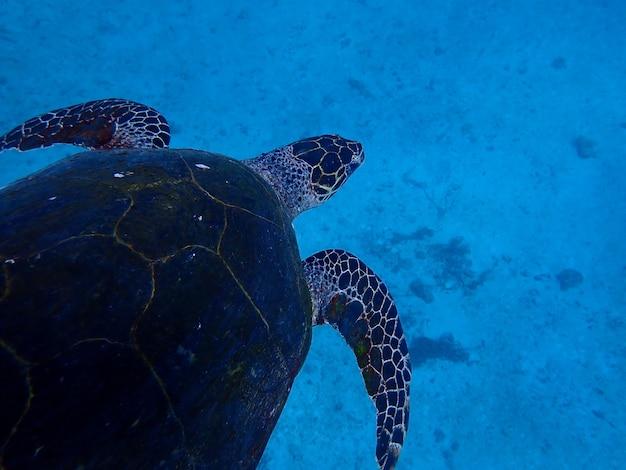 Turtle swimming underwater.