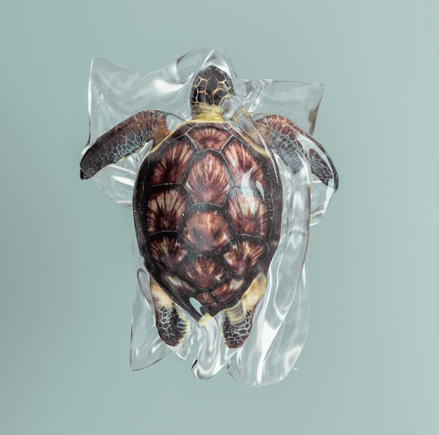 Turtle  trapped in a plastic bag.